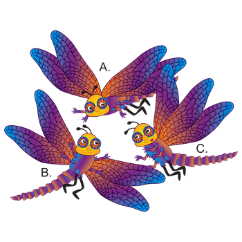 Dragonfly Brothers A. B. and C.